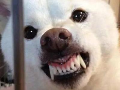 田缘告诉你狗狗爱叫和咬人怎么办?